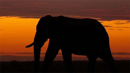 Wild Life Elephant Sri Lanka Lespri